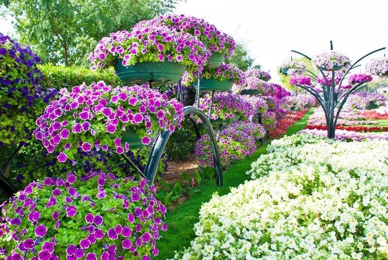 Когда сажать цветы что все лето цветут 44