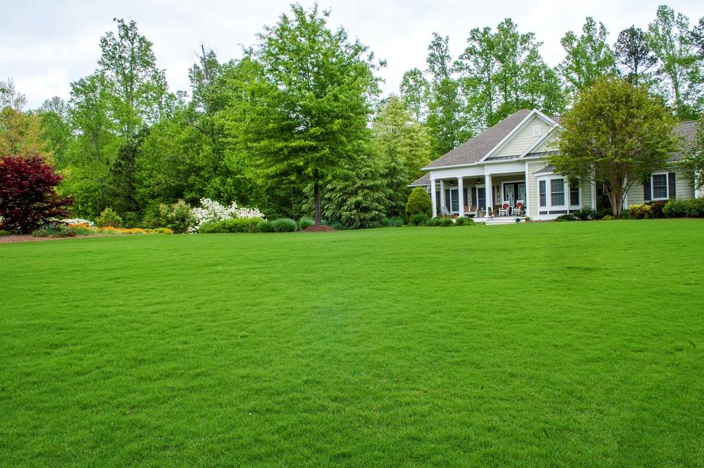 Ландшафтный дизайн и рулонный газон правильный уход от компании Биония