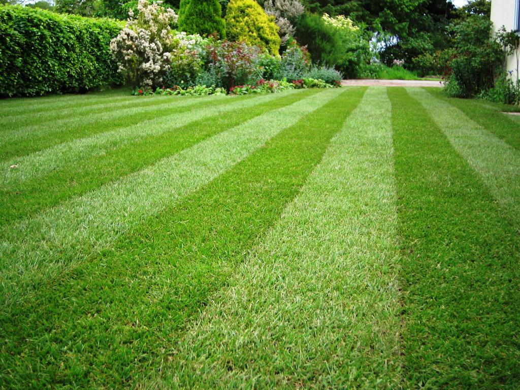 Ландшафтный дизайн виды газона и уход за газоном