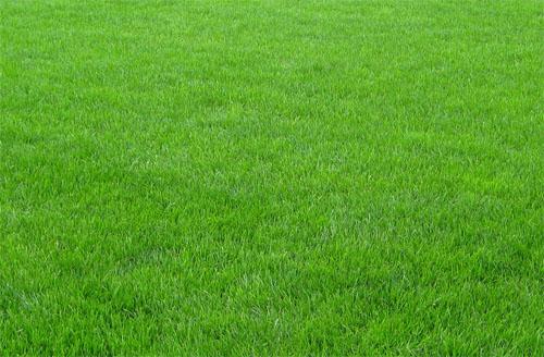 Ландшафтный дизайн и рулонный газон от компании Биония